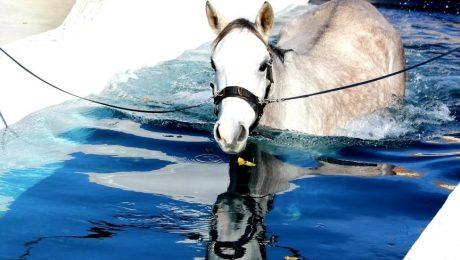 balnéothérapie pour chevaux lot-et-garonne