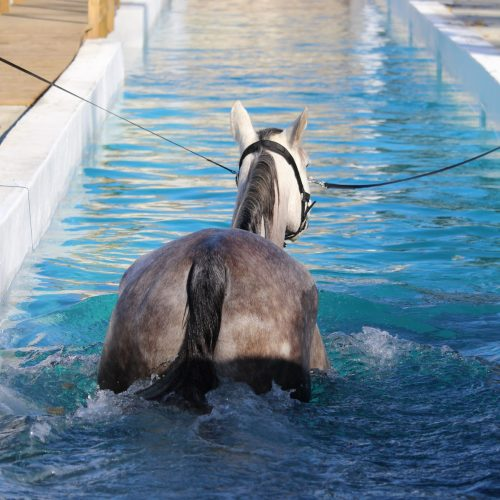 balnéothérapie pour cheval lot-et-garonne