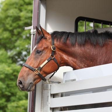 transport de chevaux lot-et-garonne