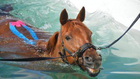 centre de remise en forme lot-et-garonne pour chevaux